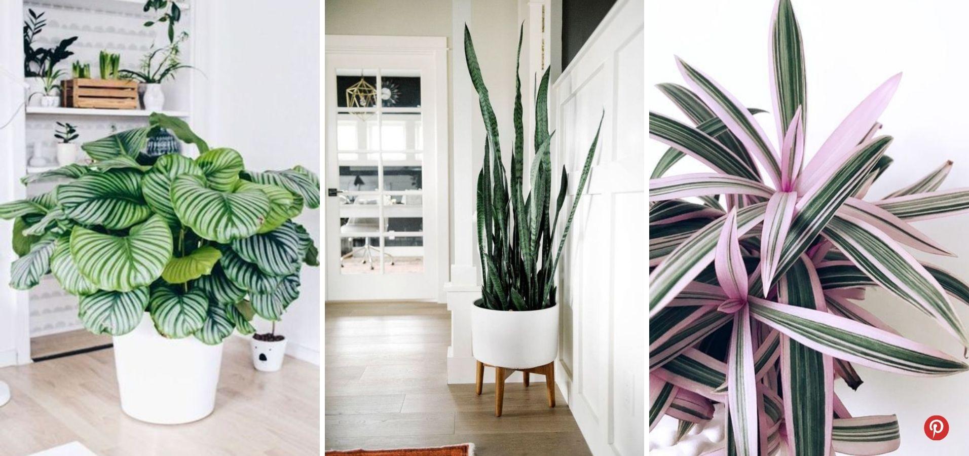 Plantes déco entrée